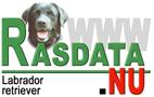 Information om Labrador retriever från Rasdata.nu